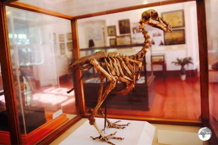 A only complete skeleton from the extinct Dodo can be viewed at the National History museum in Mahébourg.
