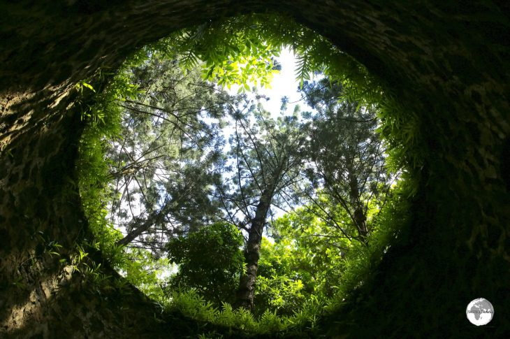 A view of the forest from inside the ruins of a windmill at Bras d'Eau National park.