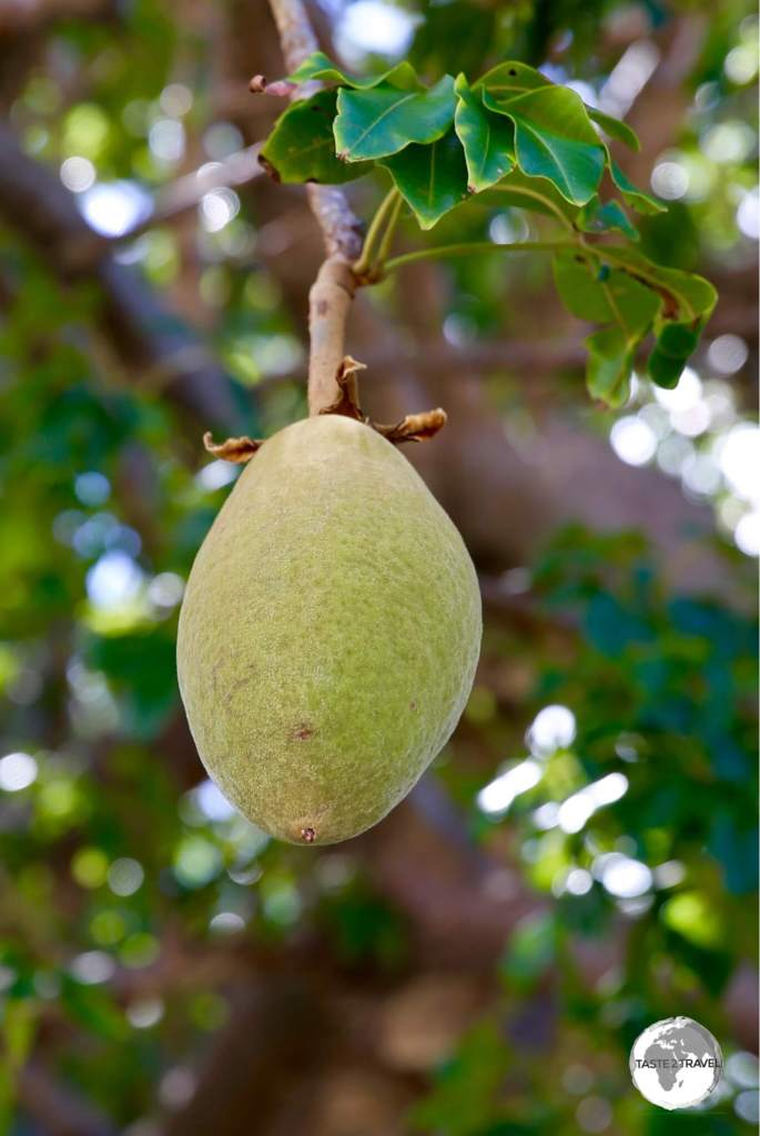 The large fruit of the Baobab tree is used by locals to make fruit juice which has a citrus flavour.
