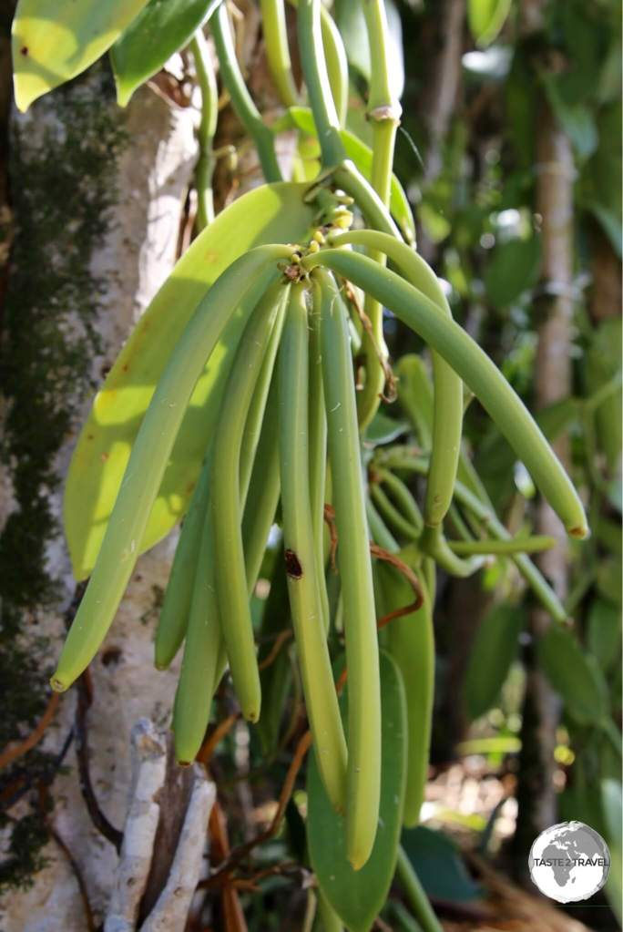 Vanilla is widely grown on Reunion and is an important export item.
