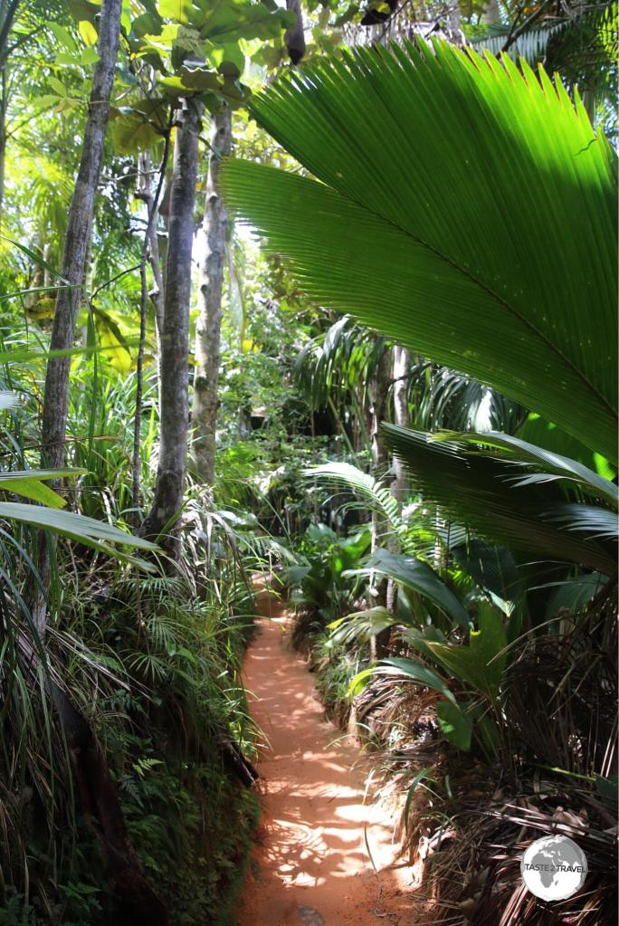 One of many walking trails in the Vallee de mai.