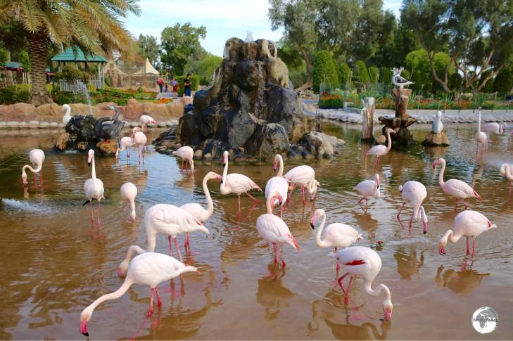 Pink Flamingos at Al Areen Wildlife Park & Reserve.
