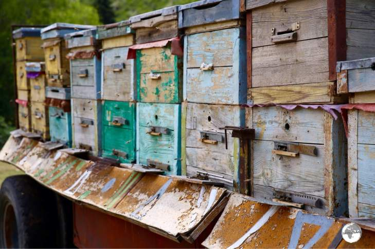 Bee hives at Jeti-Ögüz are kept on the back of trailers which allows them to be easily relocated.