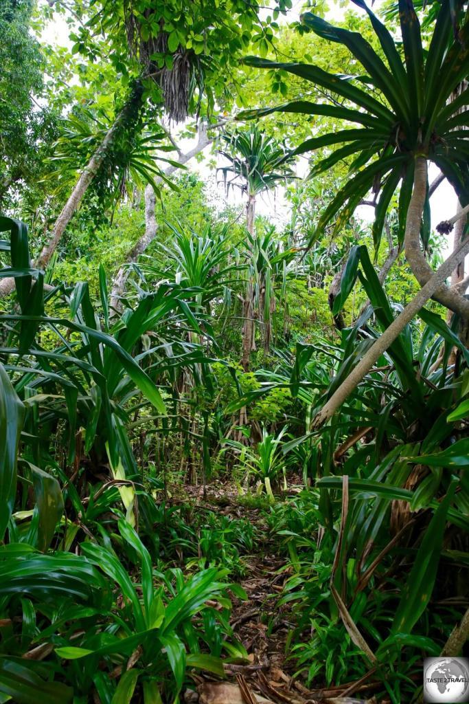 Lush vegetation on Pig island.