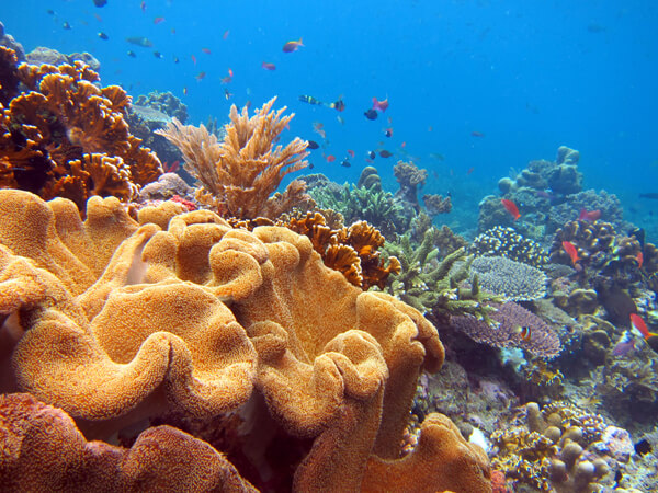 A stock photo, supplied by Dive Timor, shows the kind of reefs which can be seen along the coast of Timor-Leste.