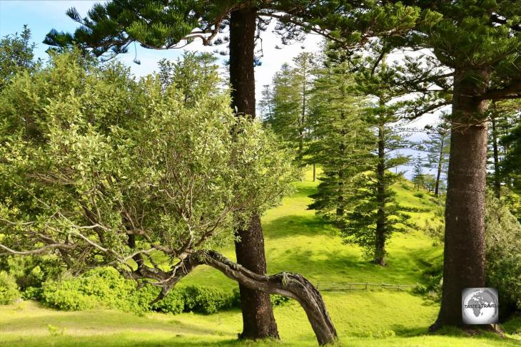 Norfolk Island is a very green and clean destination with Norfolk Island pines framing every view.
