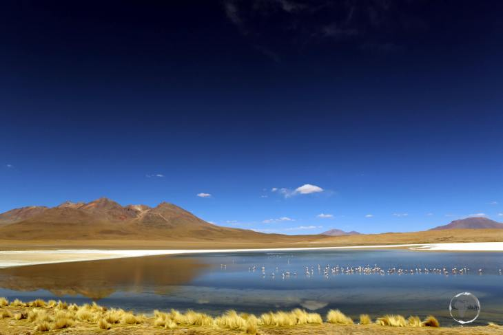 A view of Laguna Cañapa with whispy clumps of golden 'Stipa Itchu', also known as Andes grass.