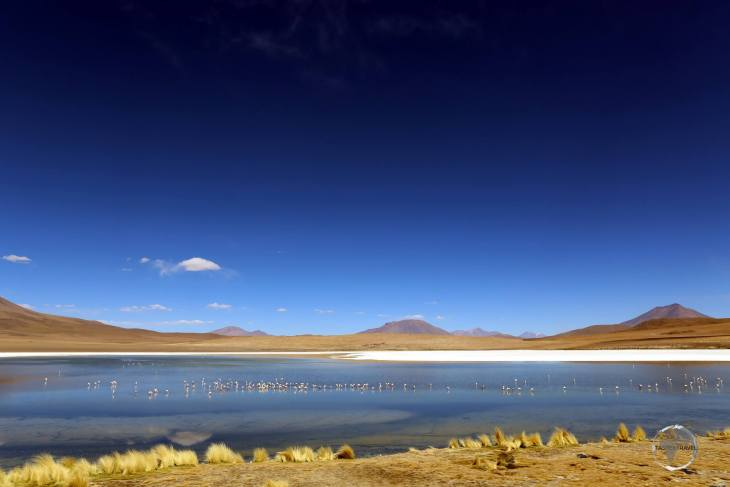 Andean flamingos are drawn to the saline waters of Laguna Cañapa, a highlight of the Bolivian altiplano, near the Salar de Uyuni.