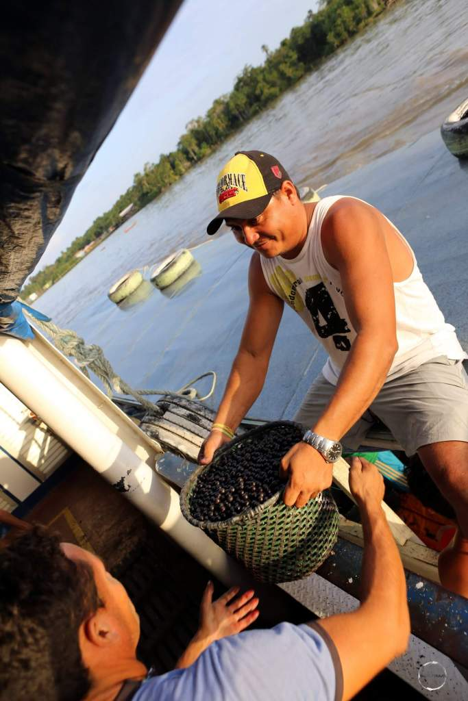 Açaí farmers, whose plantations are in the remote Amazon jungle, loading their berries onto our boat for transportation to Macapá city.
