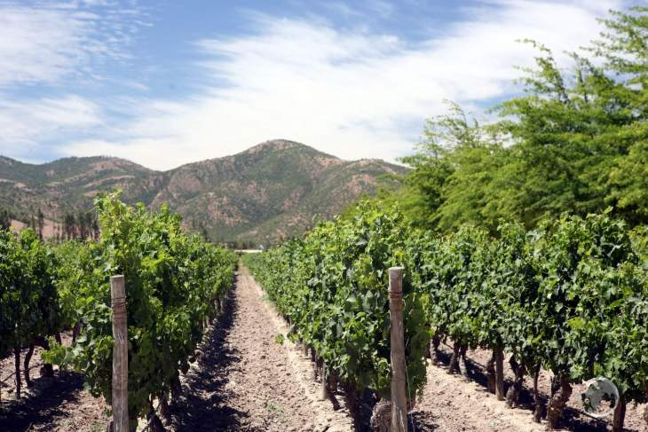 The interior of central Chile is home to many wineries which are renown for their full-bodied Cabernet Sauvignon red wines.