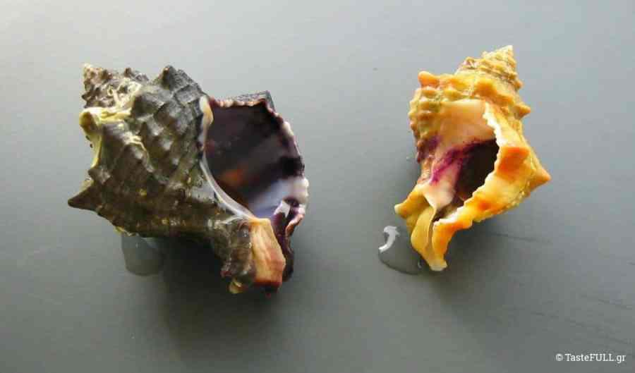 ostraka-porfira