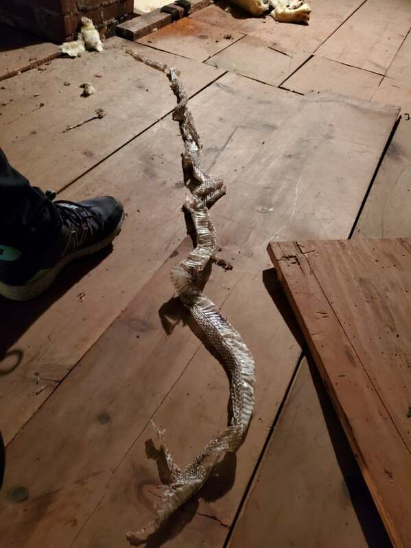 snake skin in attic, large snake somewhere in house, Fails, regret life choices, 2020, bad year, best funny pictures of the year