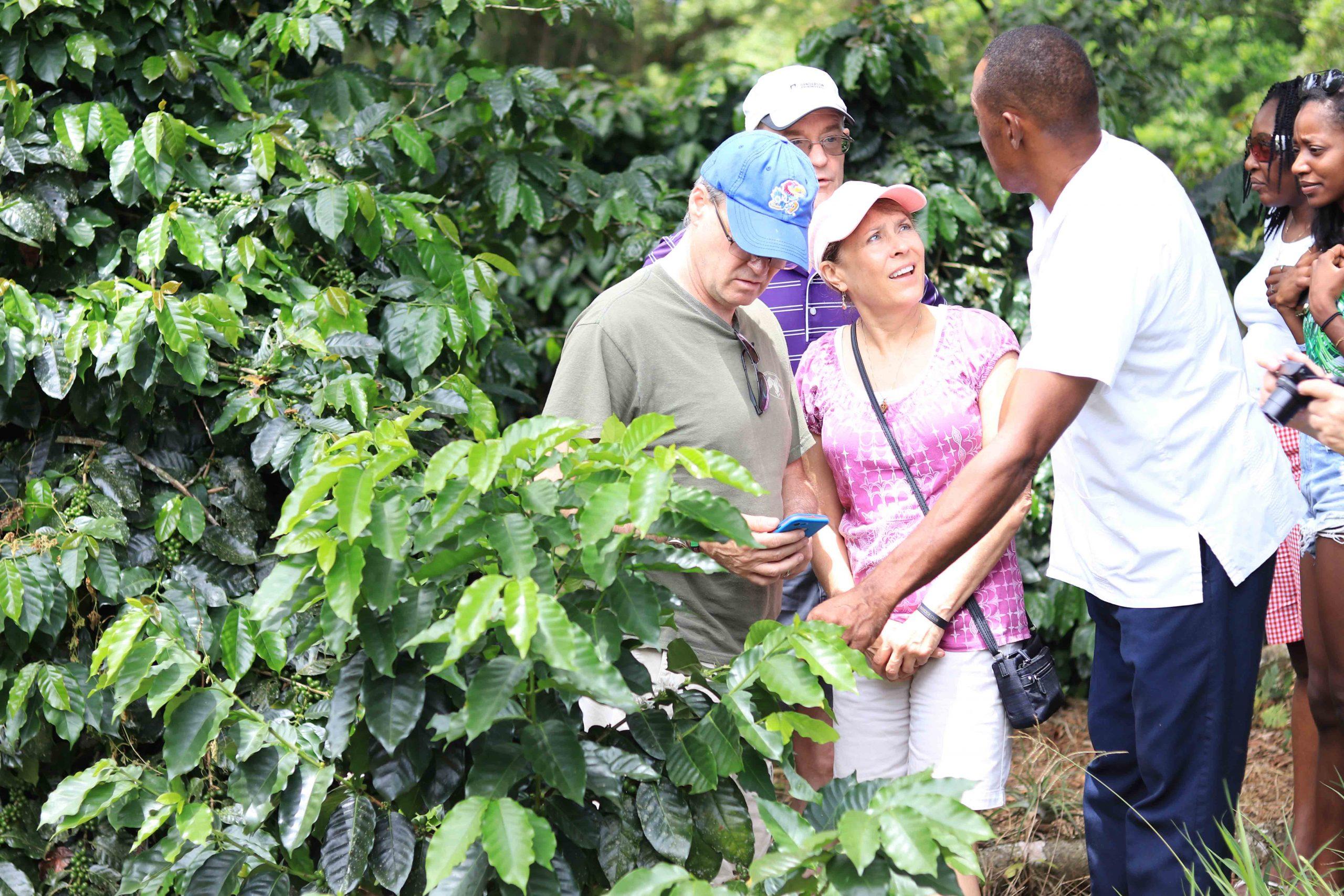 https://i0.wp.com/www.tasteofjamaicatours.com/wp-content/uploads/2020/04/Taste-of-Jamaica-Farm-Tour-42.00-scaled.jpg?fit=2560%2C1707