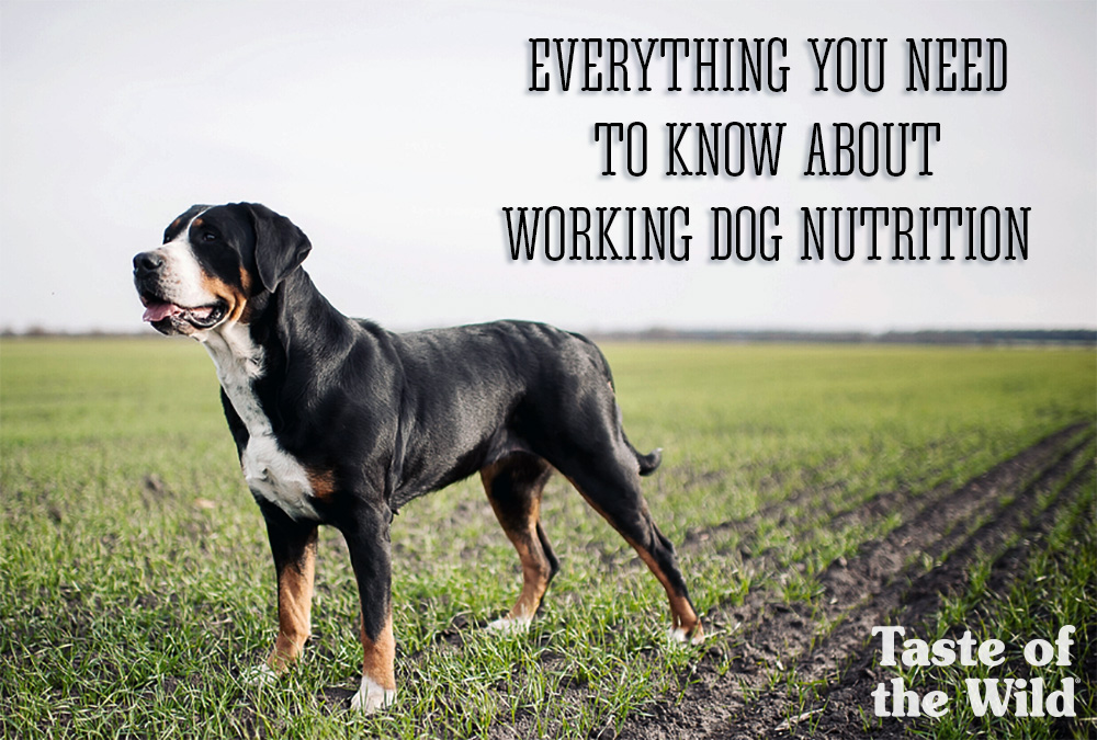 Working Dog Nutrition