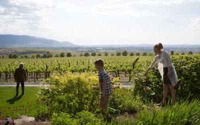 Hedges Family Estate Washington Wine