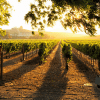 Why We Love Sonoma County