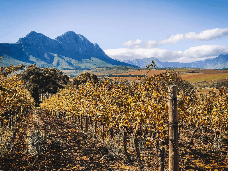 South Africa Wine and Safari Tour