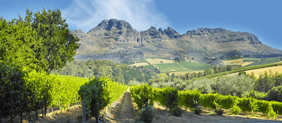 South Africa Wine Lands