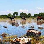 Giara di Gesturi Cavallini, wild horses