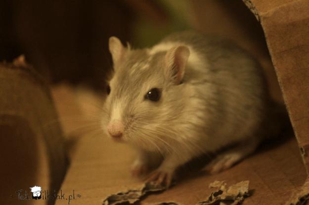 Kilu4