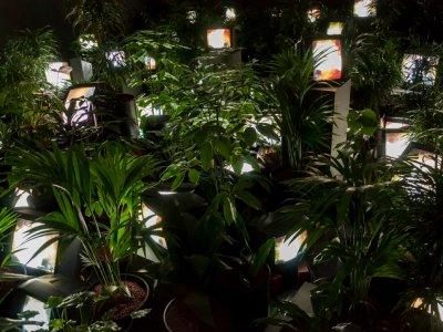 Nam June Paik   Tate Modern   17 Oct - 9 Feb