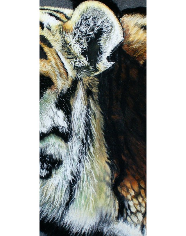 long fur close up of tiger painting