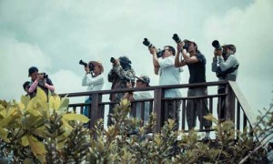Chumphon-Migrating-Raptors-Watching-2014_2