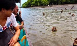 swimming-monkey