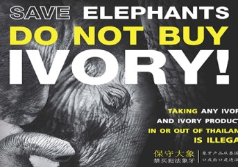 Save elephants: do not buy ivory