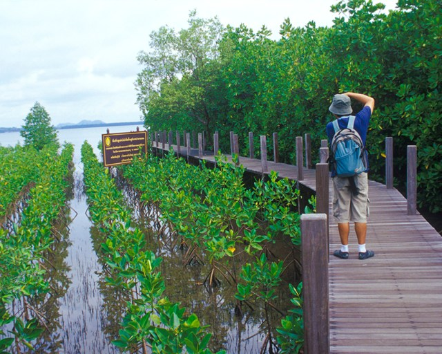 A Nature Trail Boardwalk in Kung Krabaen Bay Royal Development Study Centre, Chanthaburi