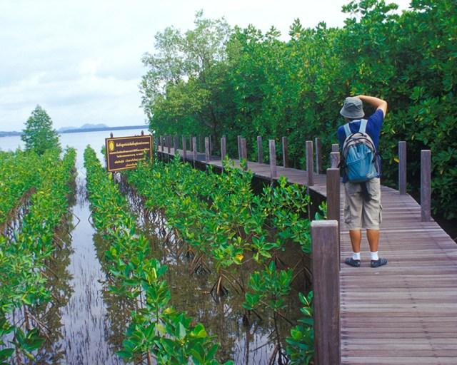 A Nature Trail Boardwalk in Kung Krabaen Bay Royal Development Study Centre, Chanthaburi
