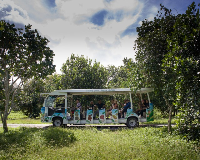 A fruit orchard tour in Rayong