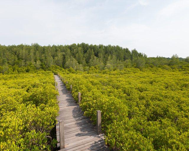 Tung Prong Thong mangrove field located at Paknam Prasae, Rayong