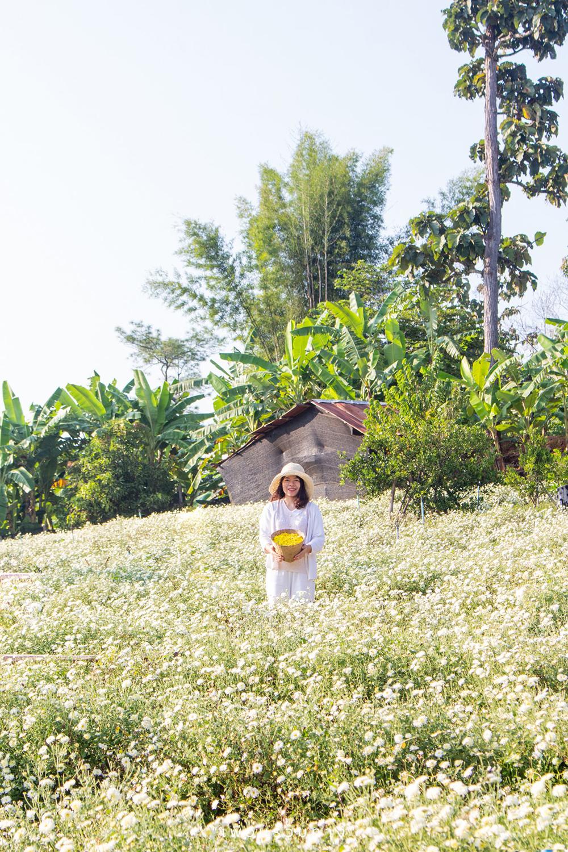 Chiang Mai in bloom: 4 beautiful gardens to freshen your life