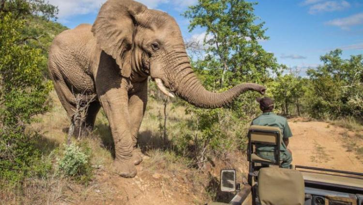 H & A Uniques Safaris (2000) Ltd