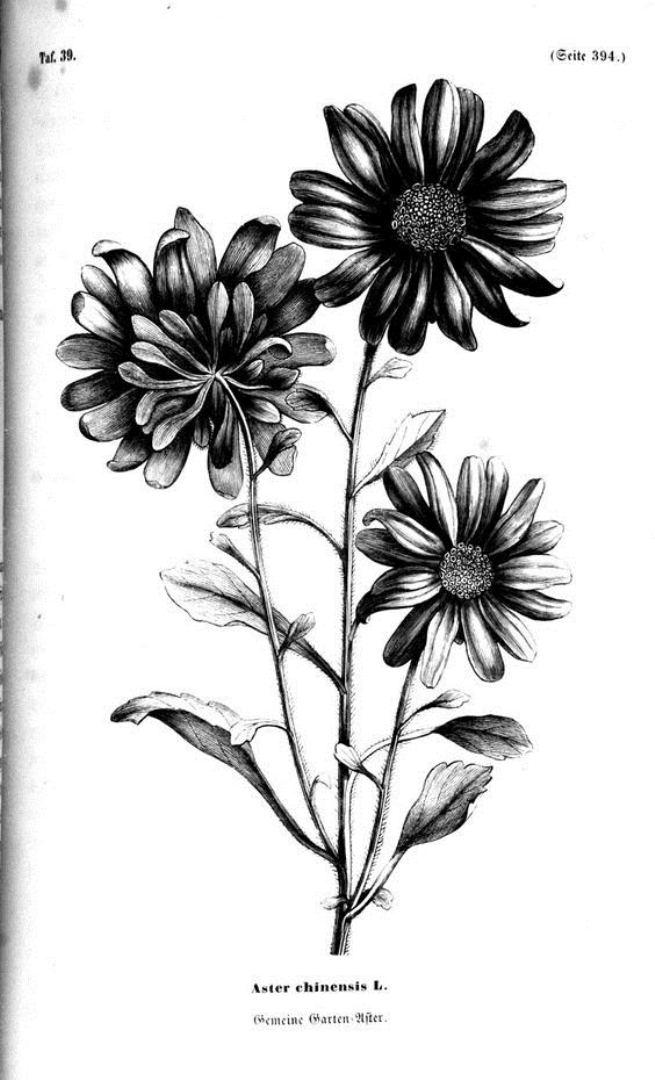 tattoo mix dövmecim çiçek dövmeleri (1)