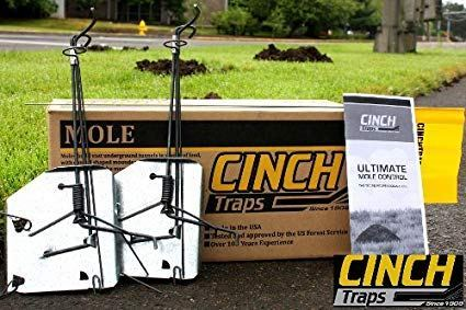 Top 10 Best Mole Traps Reviewed (**2019 Edition**)