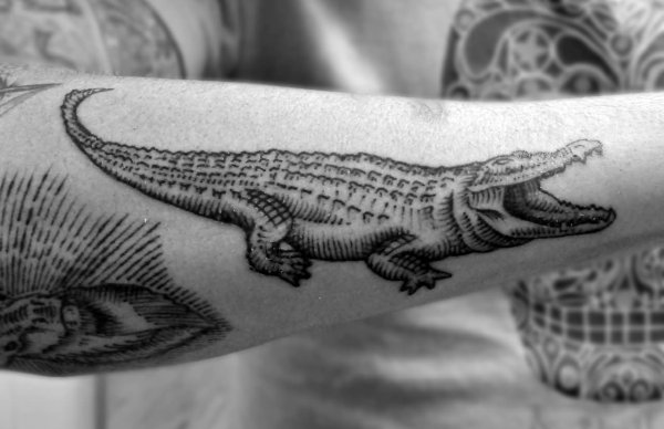 Alligator Tattoos Design Ideas And Meaning
