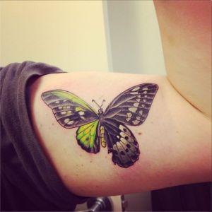 Mariposa mitad Alas Verdes