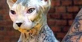 tattoed cat
