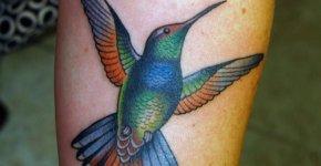 Tattoo Humingbird