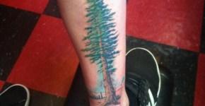 Tatuaje Sequoia