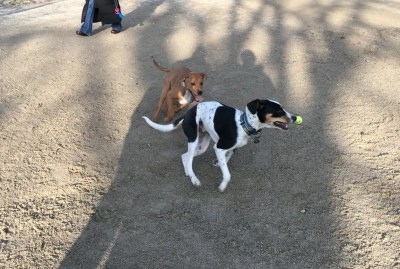 Dog park fun! We all can't wait to go back!