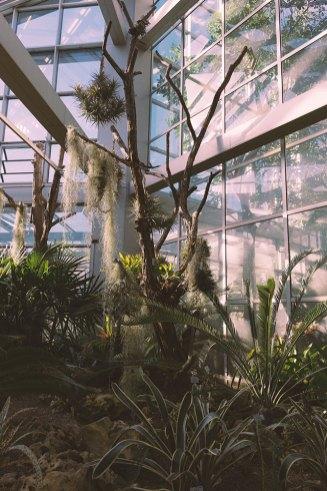 Palmengarten#3