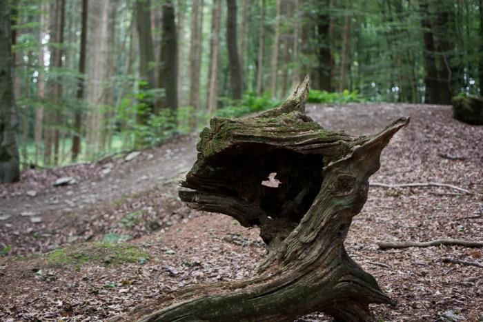 Waldschrate#2 by Michael Krämer