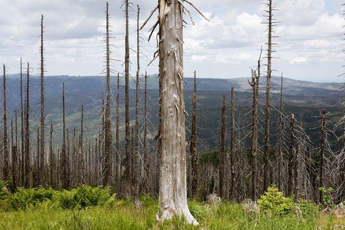 skeleton trees #1