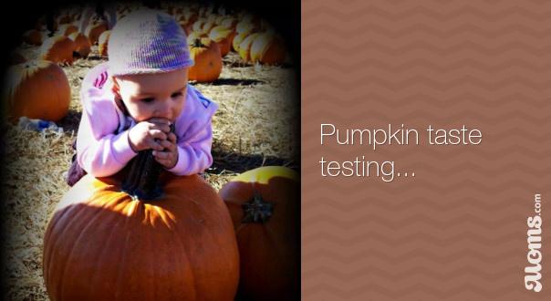 e85af93aa183a19730e29db04c783bd3.pumpkin-taste-testing