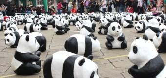 1600 Pandas in Malaysia