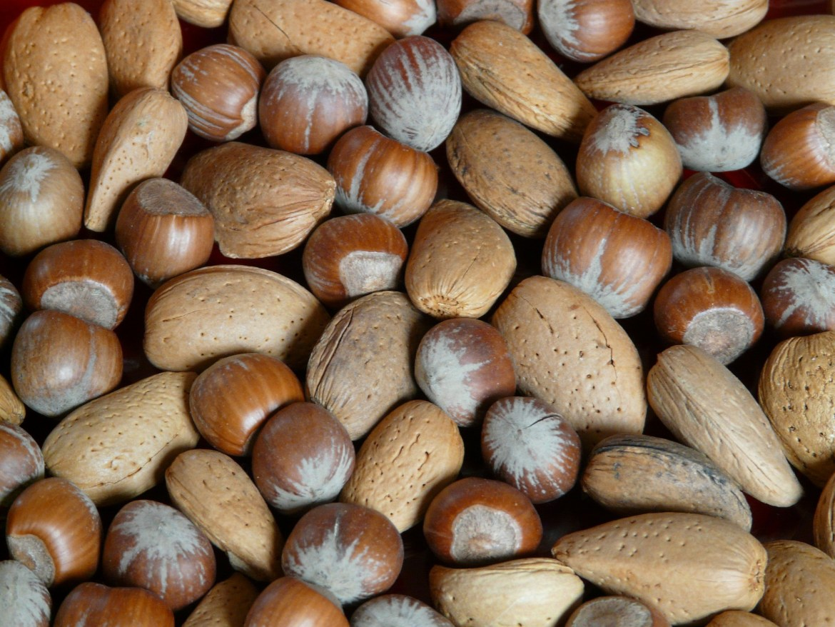 benefits of nuts, dubai blogger,