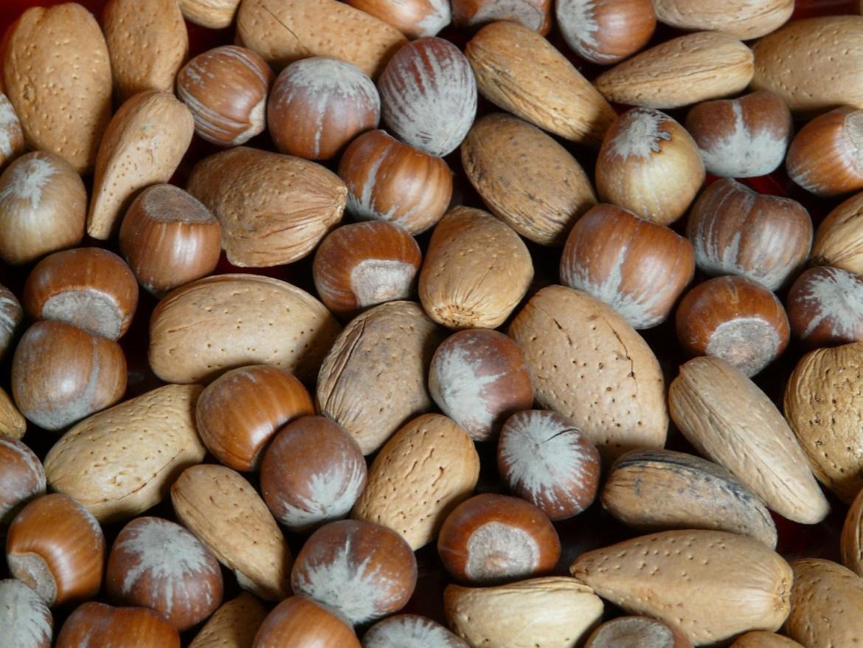 benefits of nuts, dubai blogger,